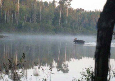 Moose Hunt Hunting Perrault Falls Northwestern Ontario